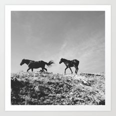 Pryor Mountain Wild Mustangs Art Print