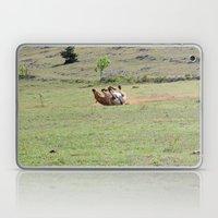 Rolling Horse Laptop & iPad Skin