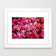Pink  Azalia Flower Framed Art Print