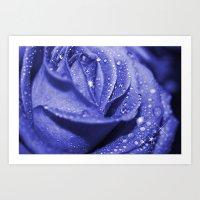 Sapphire Rose Art Print