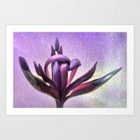 Wild Purple Iris Art Print