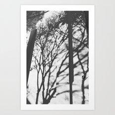 Tree Shadows - Solarized Art Print