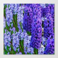 Blue-Purple Hyacinth Garden Flowers Art Canvas Print