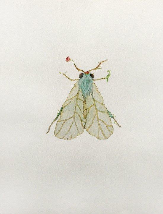 Moth Illustration  Art Print
