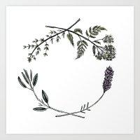 Yarrow, Sage, Lavender, Thyme Art Print