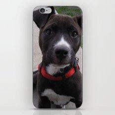 Cheka iPhone & iPod Skin