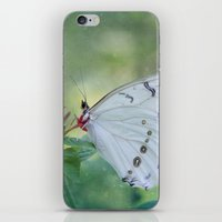 White Morpho Butterfly iPhone & iPod Skin