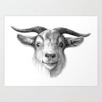 Curious Goat G124 Art Print