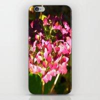 Late Fall iPhone & iPod Skin