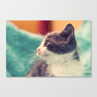 Billy The Cat Canvas Print