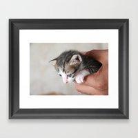 Meow. Framed Art Print