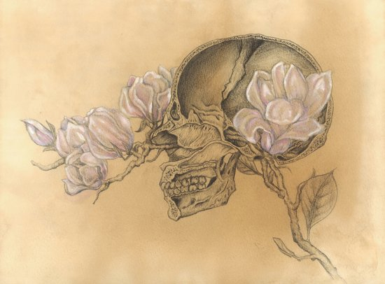 HUMAN NATURE Anatomy Series Number 1 - Skull & Magnolia Flowers Art Print