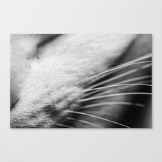 Listen up Meow Canvas Print
