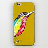 Colour bird iPhone & iPod Skin