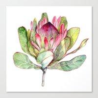 Protea Flower Canvas Print