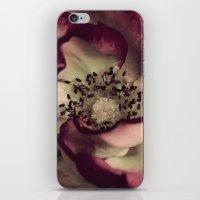 Edged In Burgundy iPhone & iPod Skin