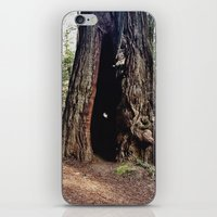 Inside A Redwood  iPhone & iPod Skin