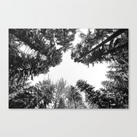 snow + trees Canvas Print
