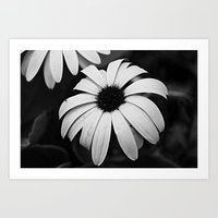 Untitled Flower Art Print