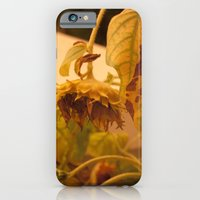 The Sun has Set and tomorrow, God willing, it will rise again [SUNFLOWER] [WILTING] [YELLOW SKY]  iPhone 6 Slim Case