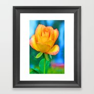 Yellow Rose With Turquoi… Framed Art Print