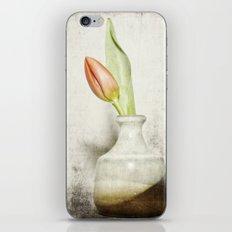 Single Tulip Still Life iPhone & iPod Skin