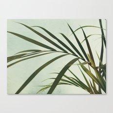 VV III Canvas Print