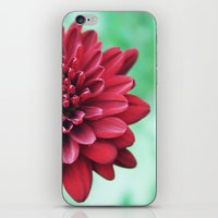 Chrysanthemum iPhone & iPod Skin