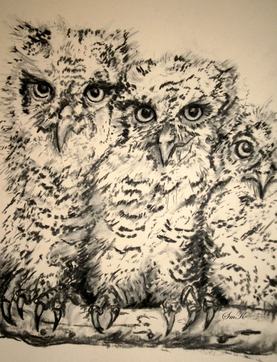Owls, 2.5 - Original Art Print