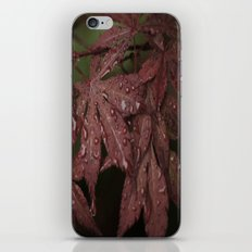 Red Leaves iPhone & iPod Skin