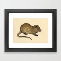 Nutria  Framed Art Print