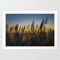 Sunset Grass Art Print