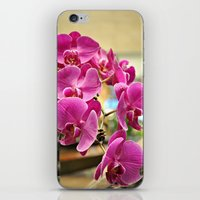 Orchids in Singapore iPhone & iPod Skin