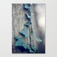 Sleeping Ivy Canvas Print