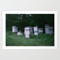 Bee Boxes Art Print