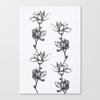 Magnolia In Black And Wh… Canvas Print