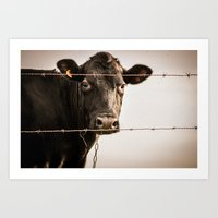 How Now, Brown Cow? Art Print