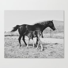 Horse and Her Foal Canvas Print
