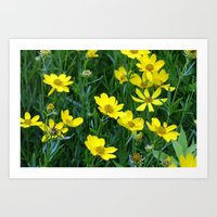 Prairie Flowers 2 Art Print