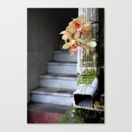 Delight From Up Above Canvas Print