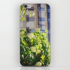 Promenade Plantée iPhone & iPod Skin