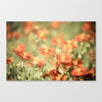 Field of Orange Canvas Print