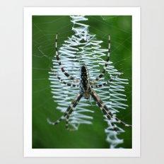 garden spider 2015 Art Print