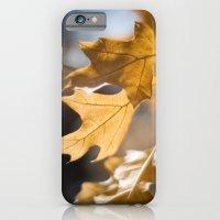 Winter Oak iPhone 6 Slim Case
