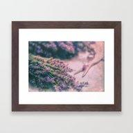Lavender Revival Framed Art Print