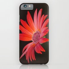 Red Gerbera Daisy on Brown  Slim Case iPhone 6s