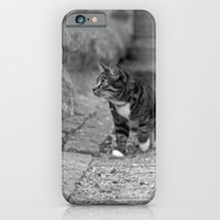 iPhone & iPod Case featuring The cat in the alley by Anna Brunk