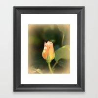 Sunshine Rosebud Framed Art Print
