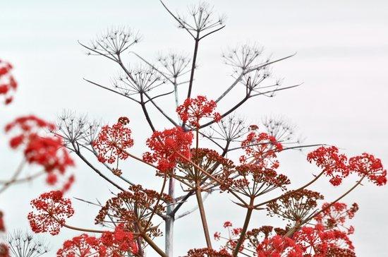 WILDFLOWERS red Art Print