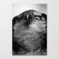 Owl series no.5 Canvas Print